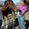 saddlebred horse nuzzles a black and white cat