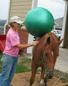 Friday Fun: Awesome Equine Clicker Training