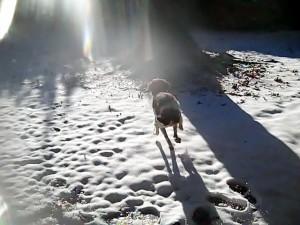 snowjump10