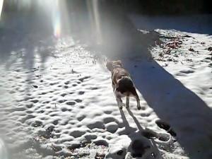 snowjump9