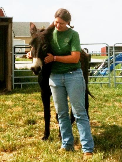 Sherrif the donkey begins training