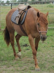 rosie with saddle