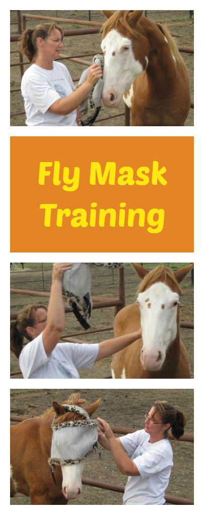 Fly mask horse training