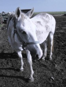 gracie, an abused mare