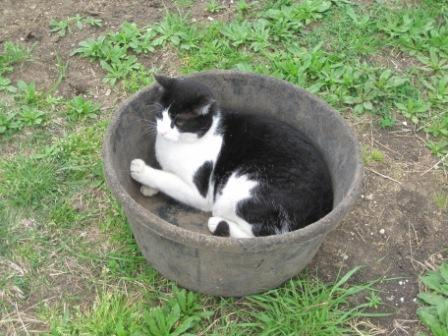 cat in a bucket