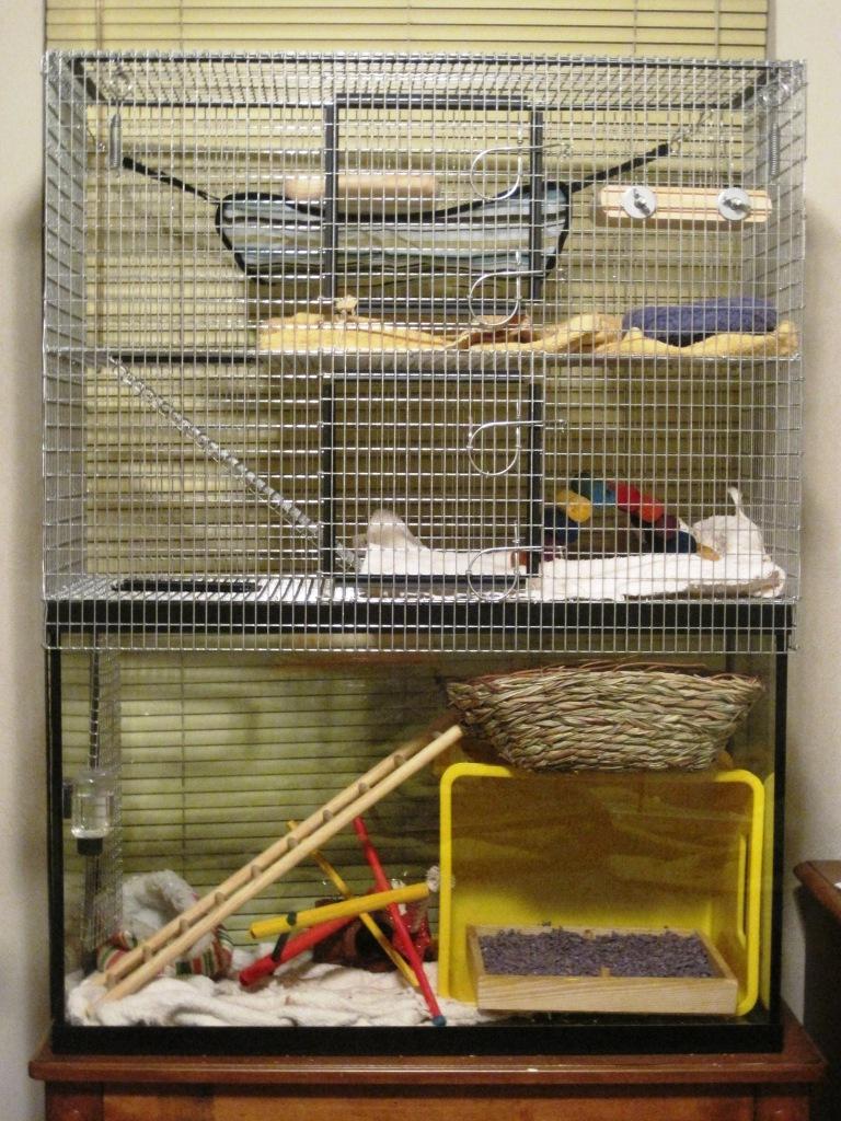 cage rat. Black Bedroom Furniture Sets. Home Design Ideas