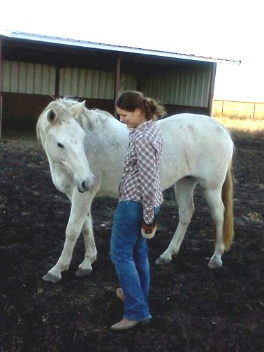 a formerly untouchable horse gets petted