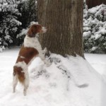 Ginger dog playing in the snow