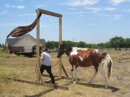 how to train your own barrel horse