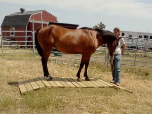Clicker training horses: Where to start?