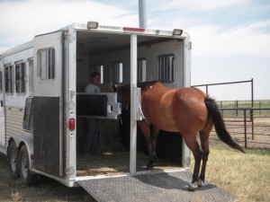 "Does your horse ""have to?"""