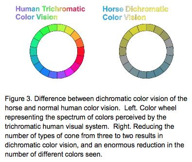 how does a horse see color stale cheerios rh stalecheerios com Arabian Horse Color Genetics Arabian Horse Color Genetics