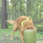 dog with head in pot