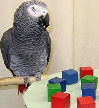 Alex the parrot 2