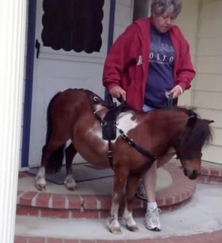 tonka - mobility service horse