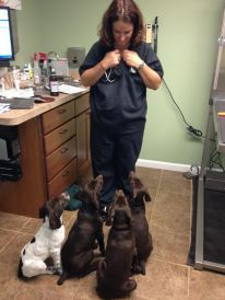 clicker training puppies at a veterinary clinic