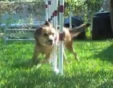 summer weave poles