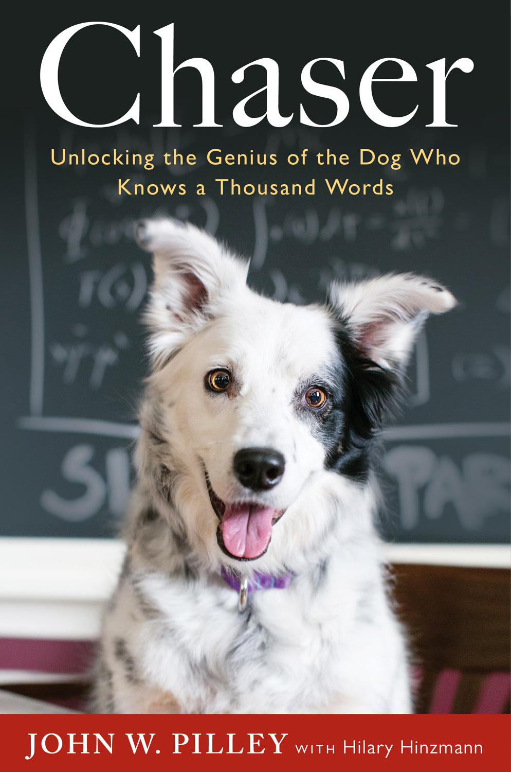 Positive Training For Dogs Book