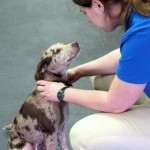 clicker training with mocha the catahoula puppy