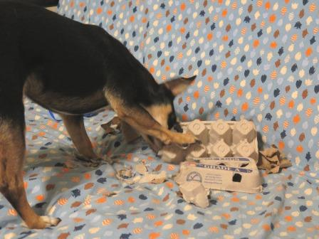 Enrichment: Henry and the egg carton