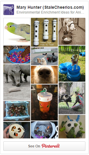 Follow my animal enrichment board on Pinterest for lots of awesome enrichment ideas!