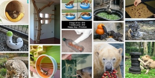 screenshot of animal enrichment board on pinterest