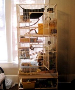 A bird cage makes a great rat cage