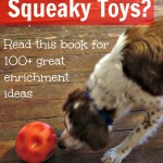 Beyond squeaky toys - with ginger