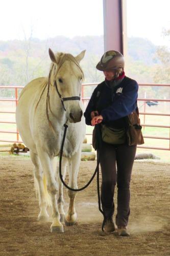 Horse clicker training - Garrow walking forward