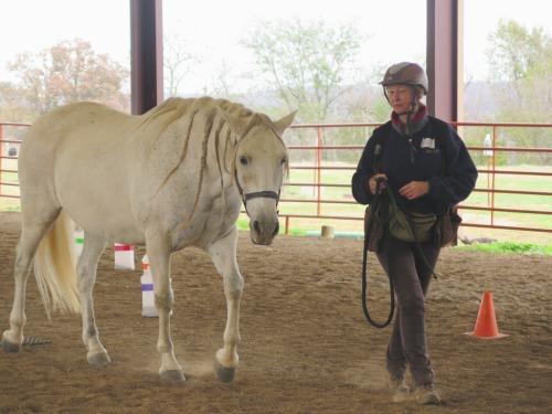Horse clicker training - Garrow walking at liberty