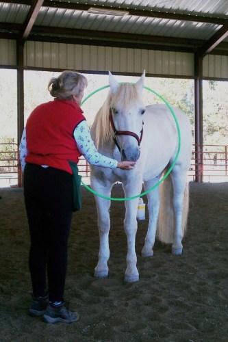 Horse clicker training - Marinero and the hula hoop