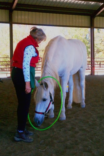 Clicker training horses - Marinero plays with a hula hoop