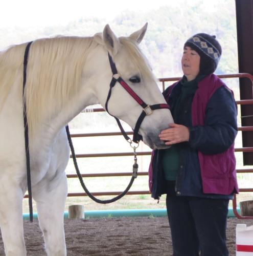 Horse clicker training - Marinero and Alexandra Kurland