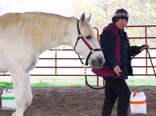 Horse clicker training - Marinero walking with Alexandra Kurland