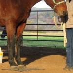 Horse clicker training - Standing on a mat
