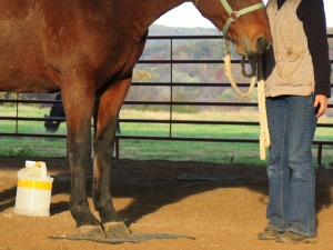 Horse clicker training - Standing on a mat