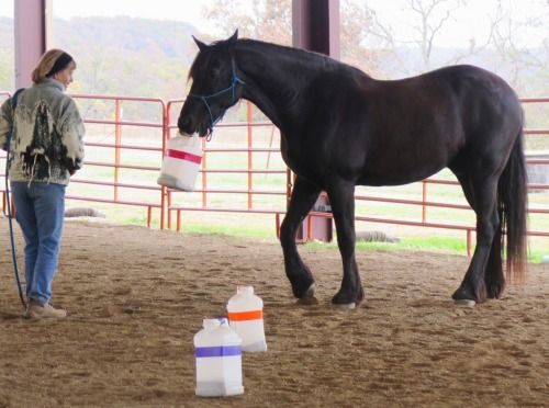 Horse clicker training - Staas' favorite trick is fetch!
