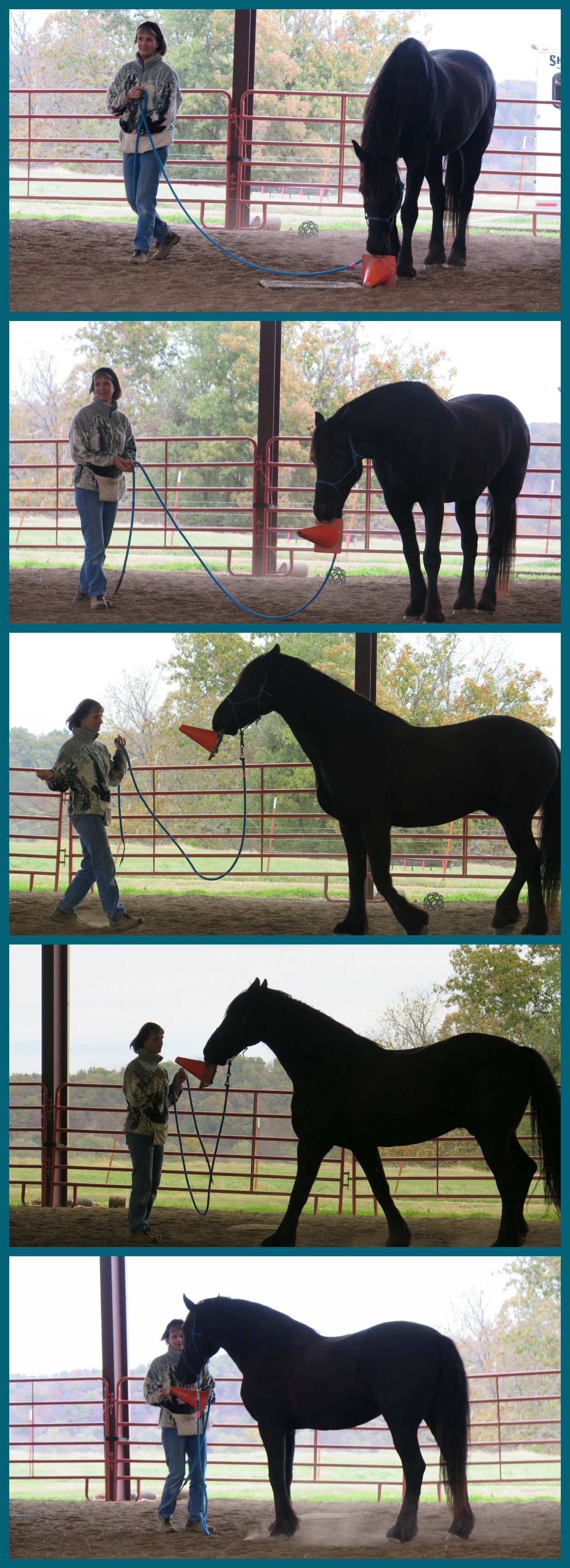 Horse clicker training - Collage of photos of Staas playing fetch