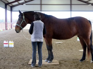 Horse clicker training - Stand on a mat