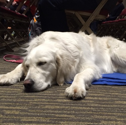 A sleepy pup at the Cincinnati ClickerExpo