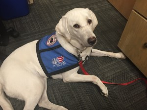 Logan the service dog