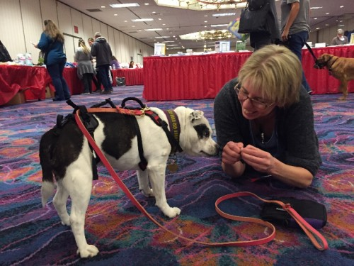 ClickerExpo - Eva Bertilsson with a cute pup