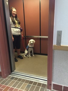 Service dog Logan practices riding the elevator