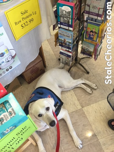 Logan the service dog in training practices a down stay while we look at birthday cards