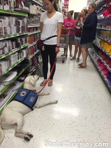 Service dog practices focusing around people in public