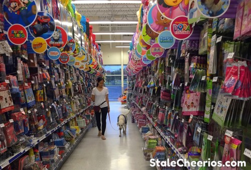 Service dog practices leash walking in public