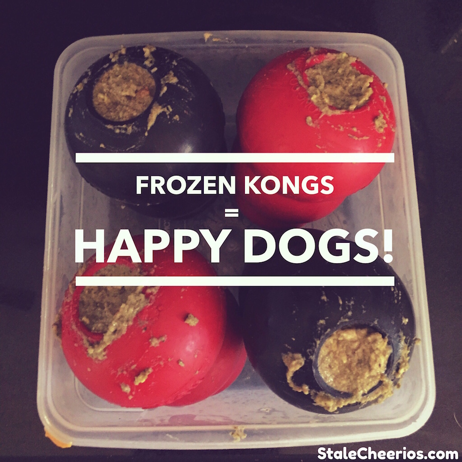 frozen KONGs make my dogs happy
