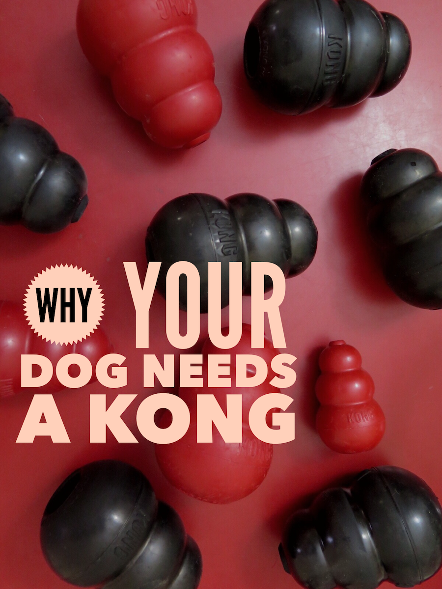 Why your dog needs a KONG. Or needs 10 KONGs! The KONG dog toy is a great play toy and chew toy. Stuff it with food to make it even more interactive. Great enrichment for your dog or puppy!