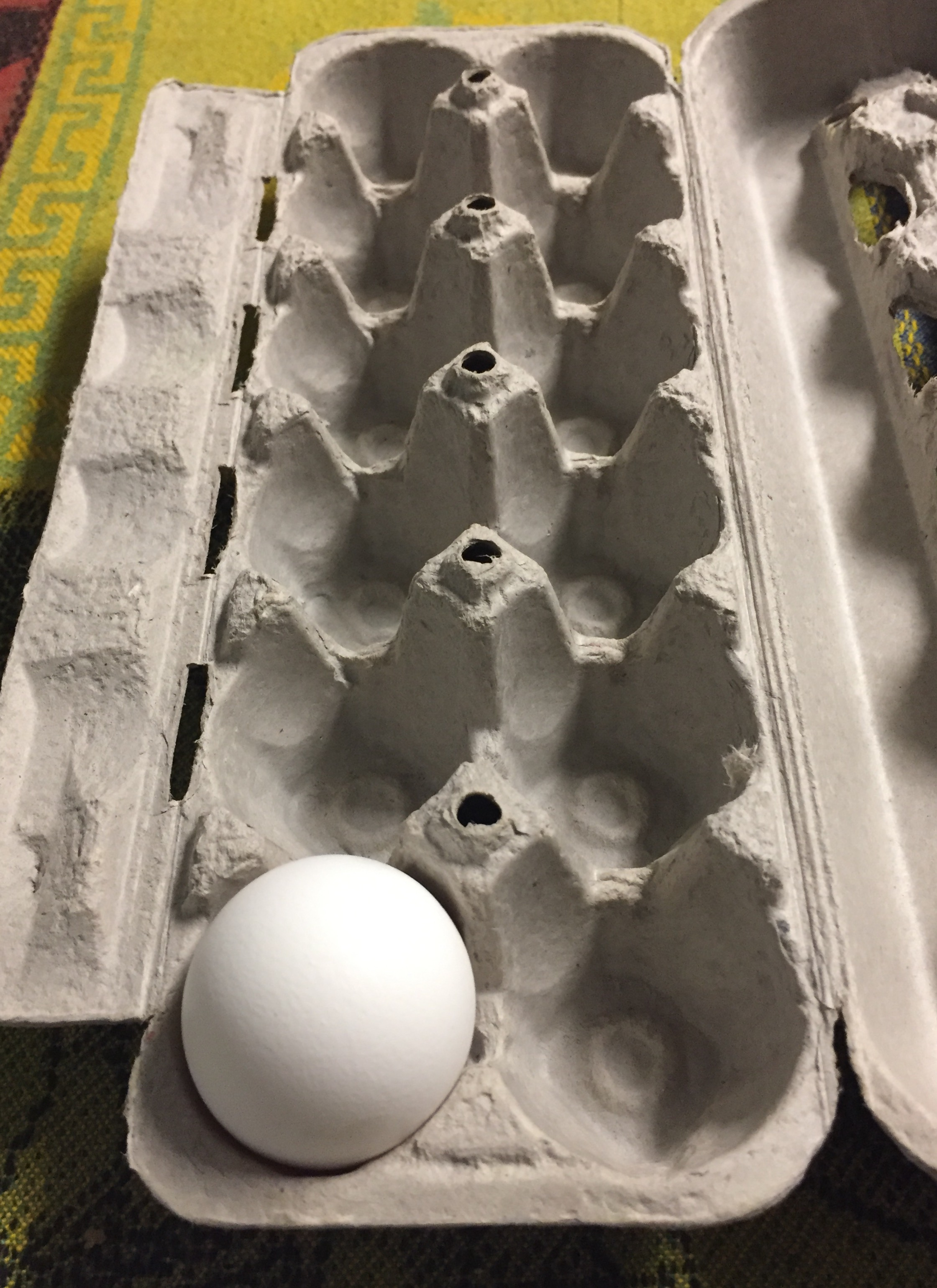 One egg in an egg carton