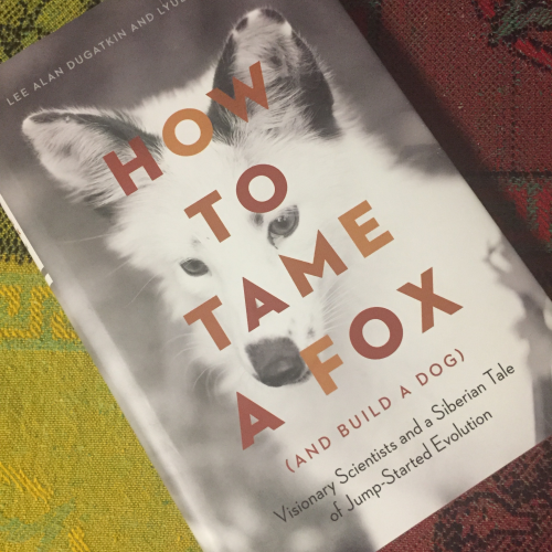 A picture of the cover of the book How to tame a fox by Lee Alan Dugatkin and Lyudmila Trut